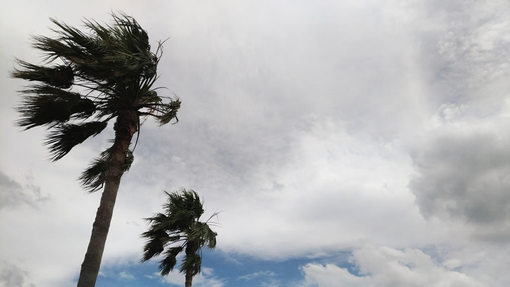 ヤシの木と台風