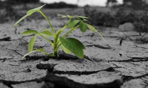 乾いた土地から芽を出した植物